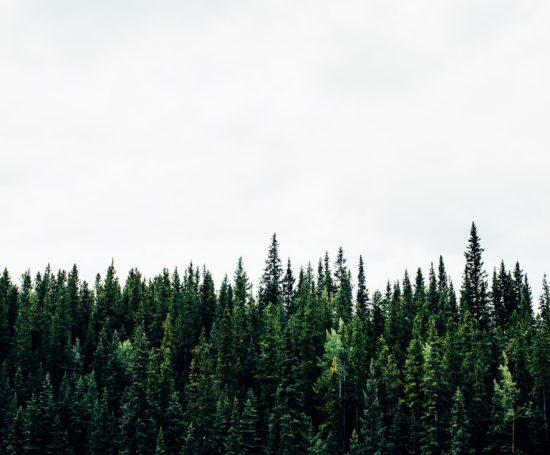 Эколоволонтёрство в Финляндии